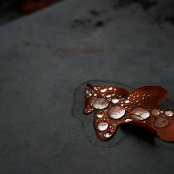 Blätter weinen nicht ...