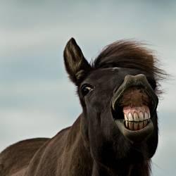 John die Zähne zeig