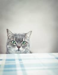 Was, kein Frühstück?