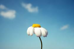 Blumenstockbild