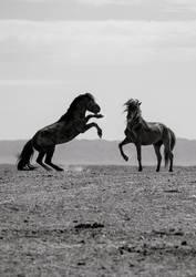Tanz der Pferde
