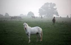 Pferd im Frühdunst
