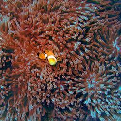Nemo III