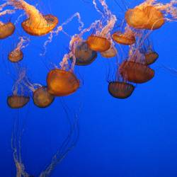 Jellyfish - Quallen III