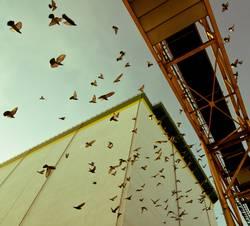 Hamburg Bird Traffic