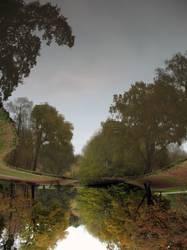 Verkehrte Waldwelt