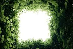 Licht am Ende des Blätterwaldes
