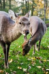 Bambi & Family