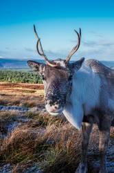 It's me, Rudolph.