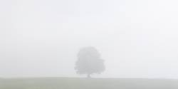 Tree on a meadow in the morning mist