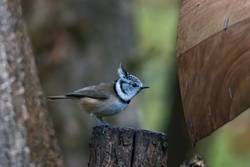 tit on a branch in the forest