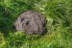 fresh cow dung in the green grass