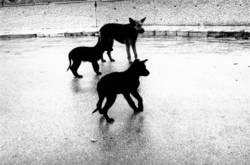 hunde im regen