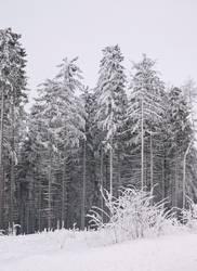 Vereister Wald