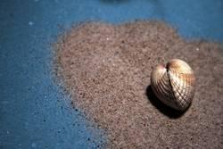Herz - Muschel - Herz