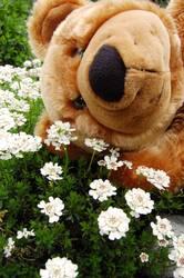 Bruno zeigt Frühlingsgefühle