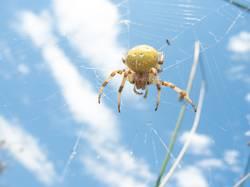 Spinne am Nachmittag