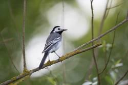 Vogel auf einem Zweig 3