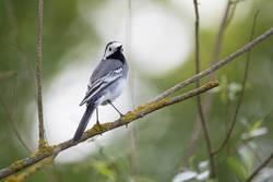 Vogel auf einem Zweig 2
