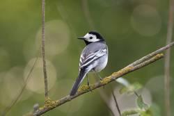 Vogel auf einem Zweig 1