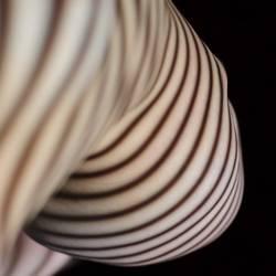 dark-striped 3