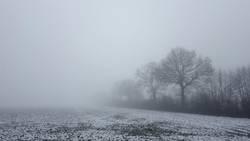 Winterliche Nebellandschaft mit Bäumen am Feldrand