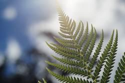 Pflanze | im Gegenlicht