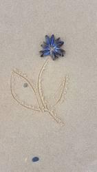 Blüte aus Muscheln auf Strandsand