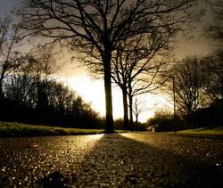 Baum der Erleuchtung