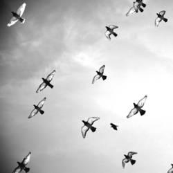 Friedensbomber