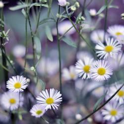 Kalte Blüten im Herbst