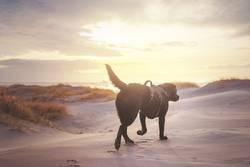 Mir reichts, ich geh an Strand!