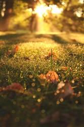 Goldener September