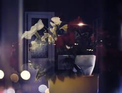 Blumentopf und Tür Doppellbelichtung