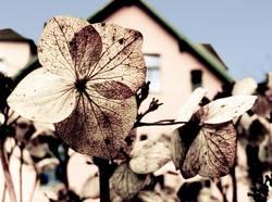 blumen blüten blau
