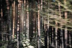 Wald im Wald im Wald