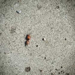 Big Bug Love