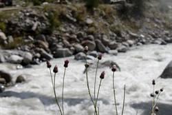 Kaukasische Flora