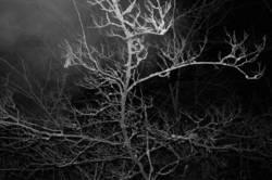 Nachts durchn Wald