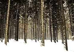 Ich seh´ den Wald nich