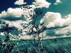 sky like blue jeans