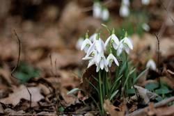 Alle zusammen in den Frühling