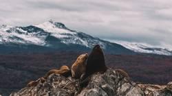 Robben in Patagonien