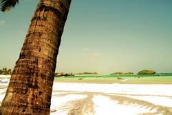 Palmschatten