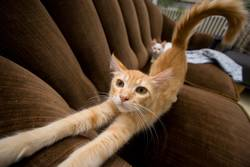 Katze streckt sich