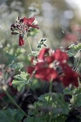rotgrünes Geflirre