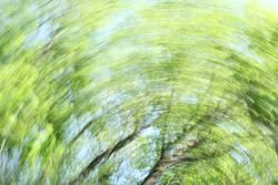 Waldstrudel