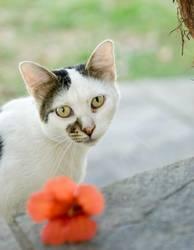 die griechische katze