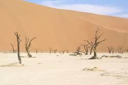 Namibische Wüste 1