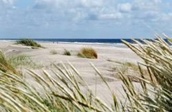 Strandläufer auf Amrum